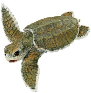 Kemp sea turtle baby