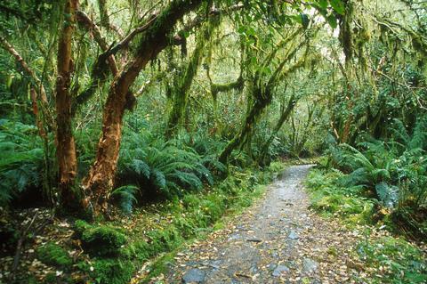 Harken forest