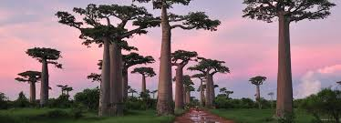 130830 talltrees