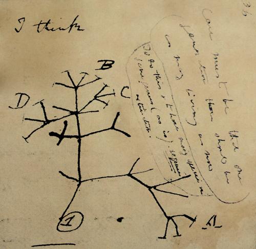 Darwin sketch