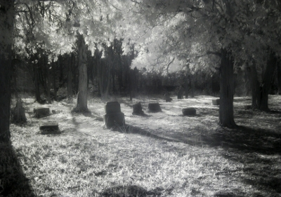 Headstones in bachelors grove cemetery chicago