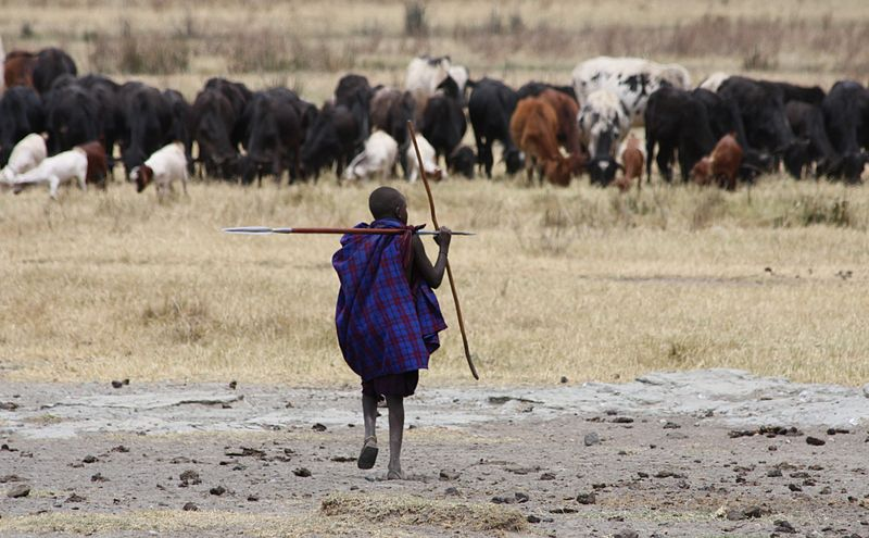 800px young masai herder