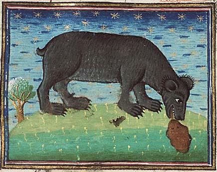 Bestiary bear