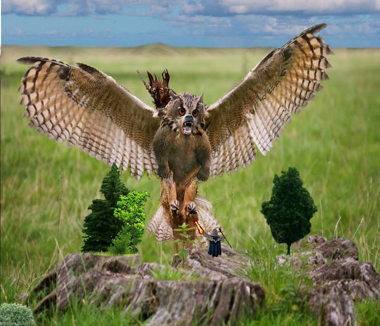 Bearowl