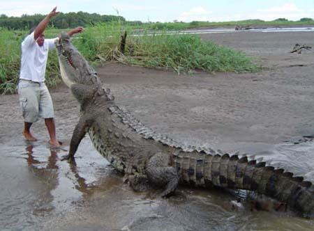 Crocodile011005
