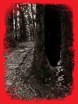 Trilha na selva2