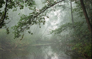 Orkish Wildwood