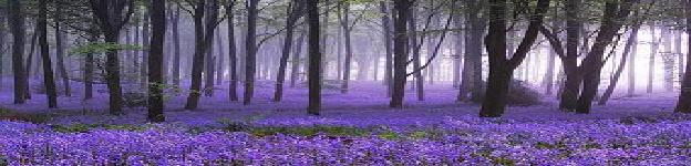 Purpleflowerforest