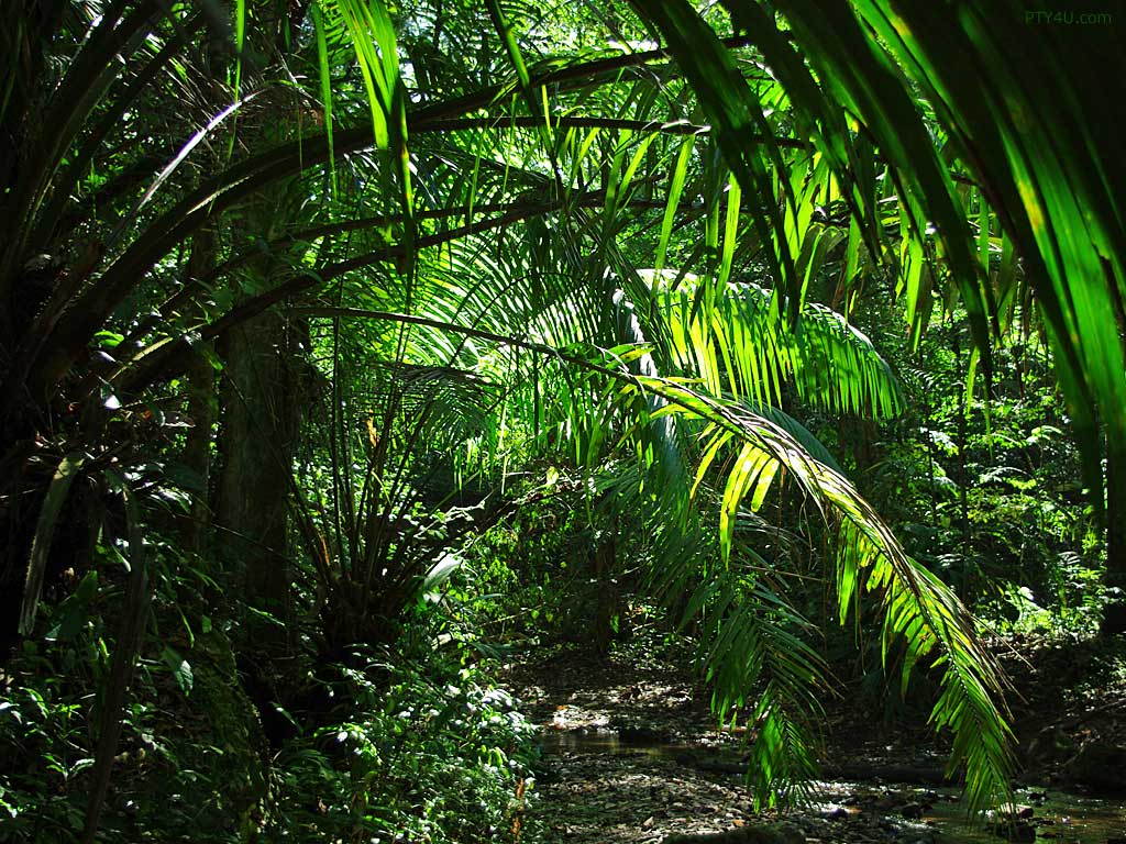 Palms jungle 913346