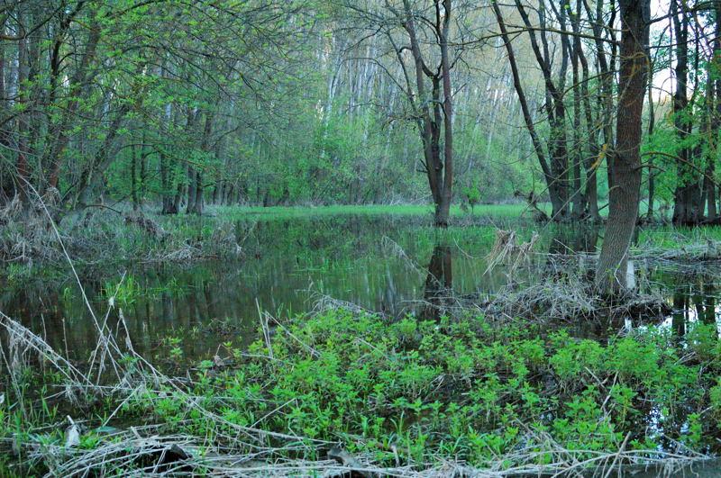 Morava s flooded forest 02
