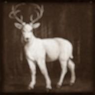 White stag sepia