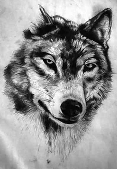 Pencil wolf drawing
