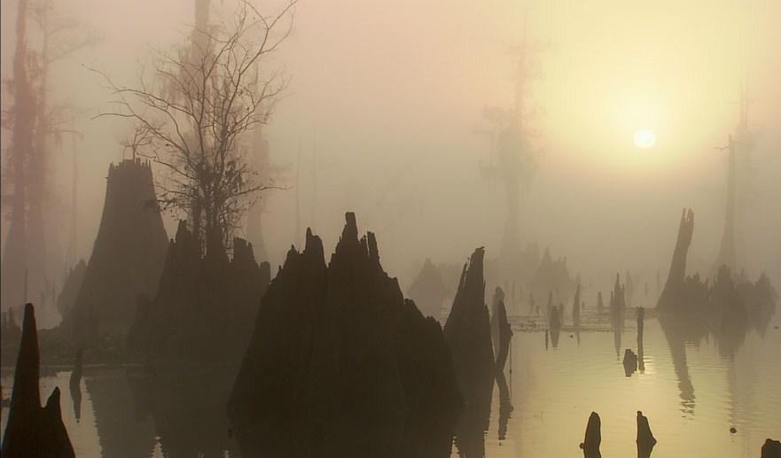 Swamp fog