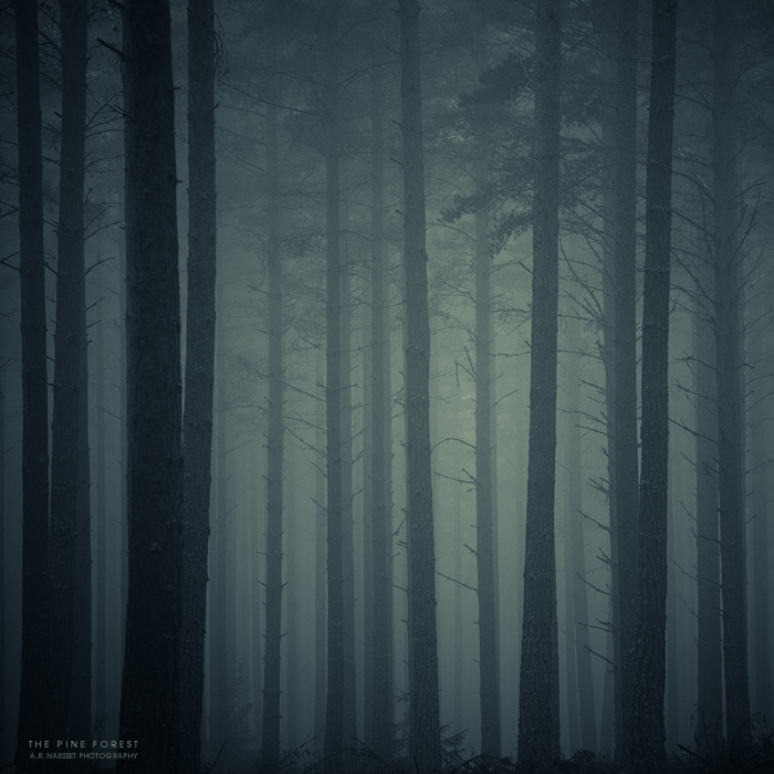The pine forest by pheelfresh1