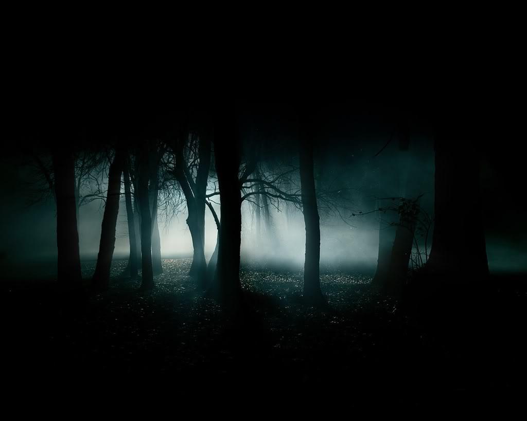 Dark forest night image