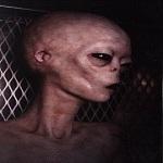 Alien greyst