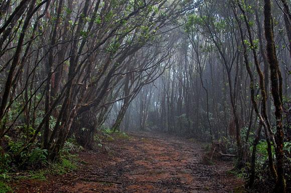 Swamp path 2