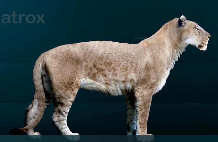 Panthera leo atrox sergiodlarosa