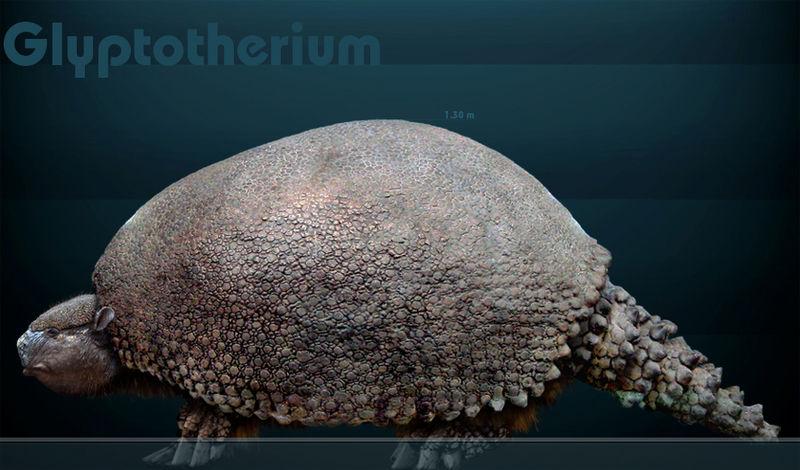 800px glyptotheriumm
