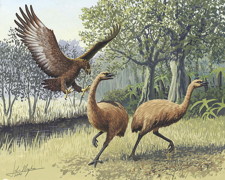 749px giant haasts eagle attacking new zealand moa