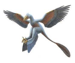 250px microraptor gui