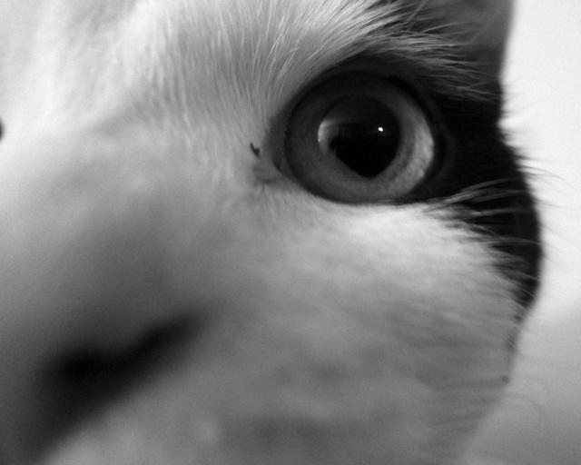 Eyem Watching You