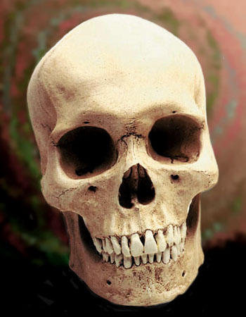 Human skull picture