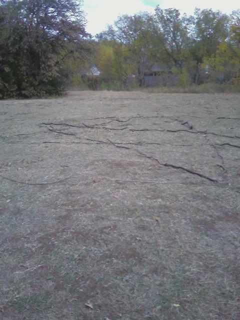 Pentagram w lesie