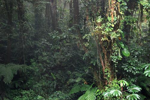 Jungles of aurum