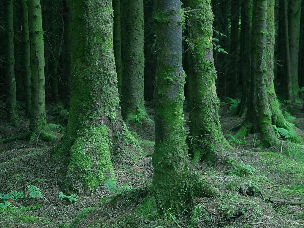 Dark, wild forests of Orkenay