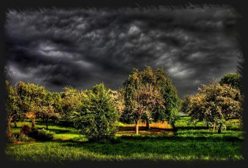 Unwetter wald