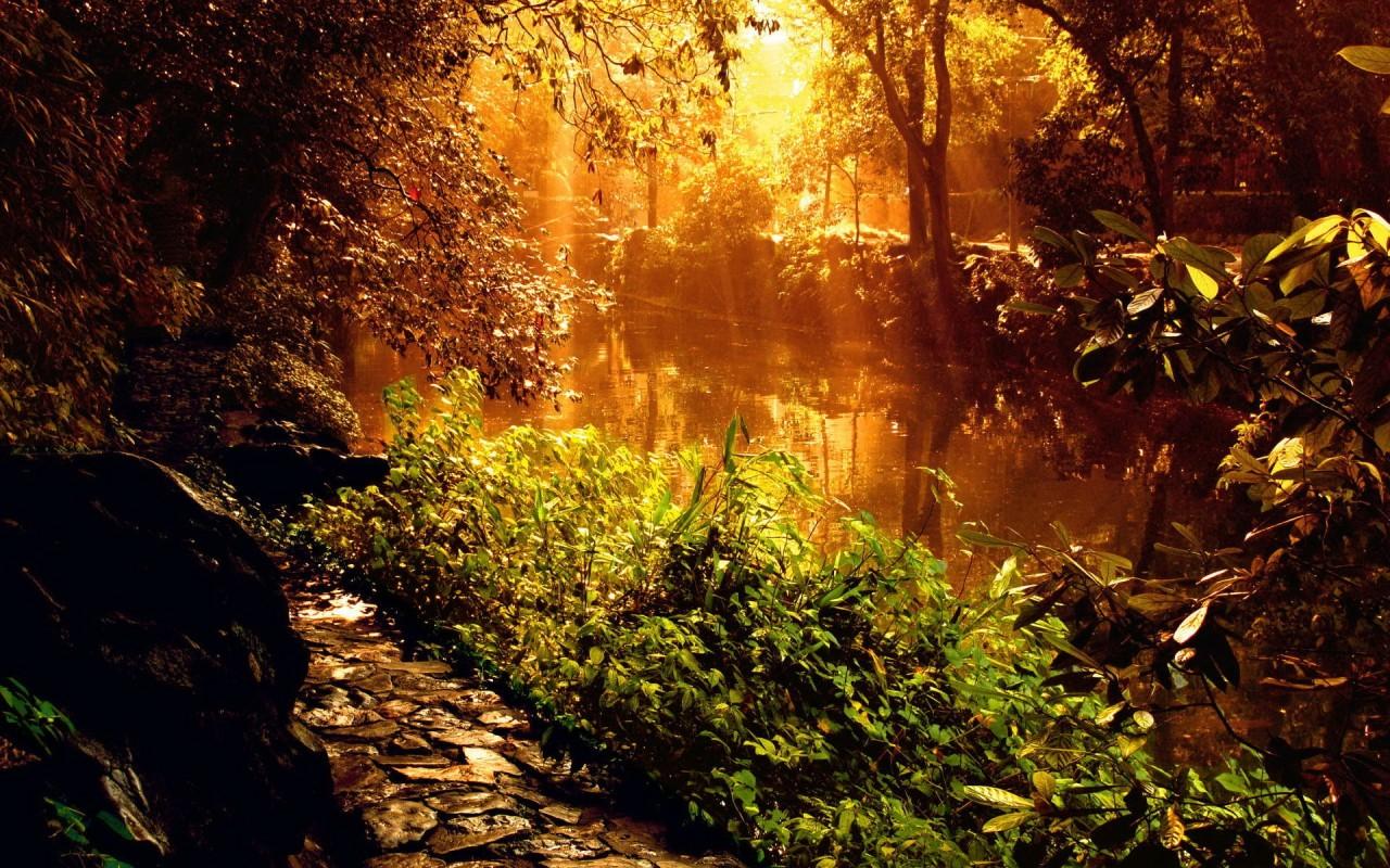 Elven forest4