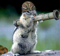 Squirrelboy38