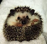 Hedgemech